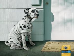 Dog_pedigree